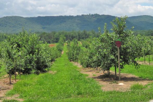 orchard2-588×392