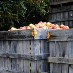 apples-bin