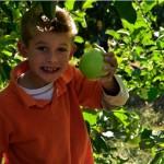 boy-holding-apple