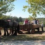 horse-drawn-wagon-ride2