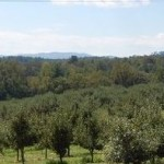 orchard-view