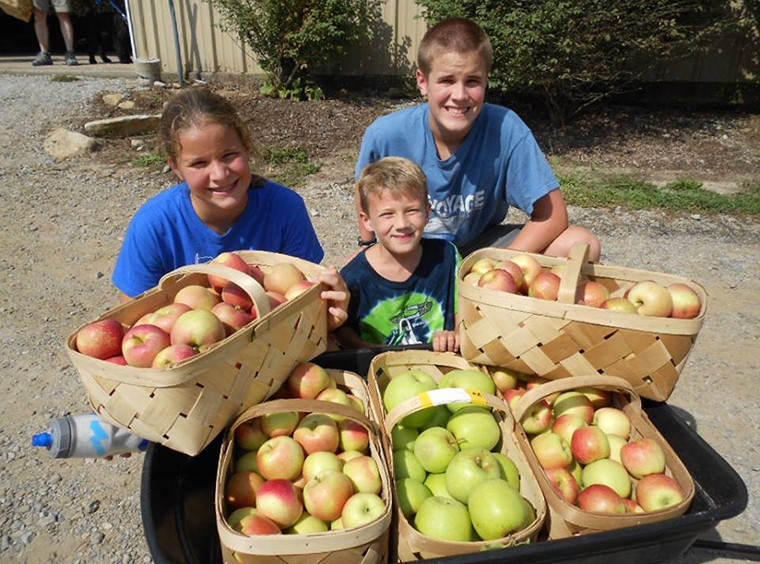 U-pick and Pre-Picked NC Apples