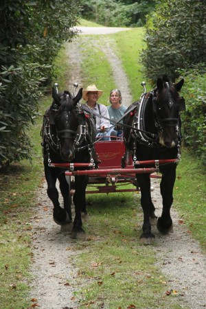 horsedrawn-hayride2